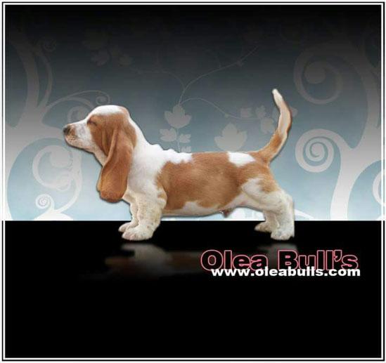 Cachorros y camadas